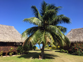 Excellent logement, Fare Miti � Moorea